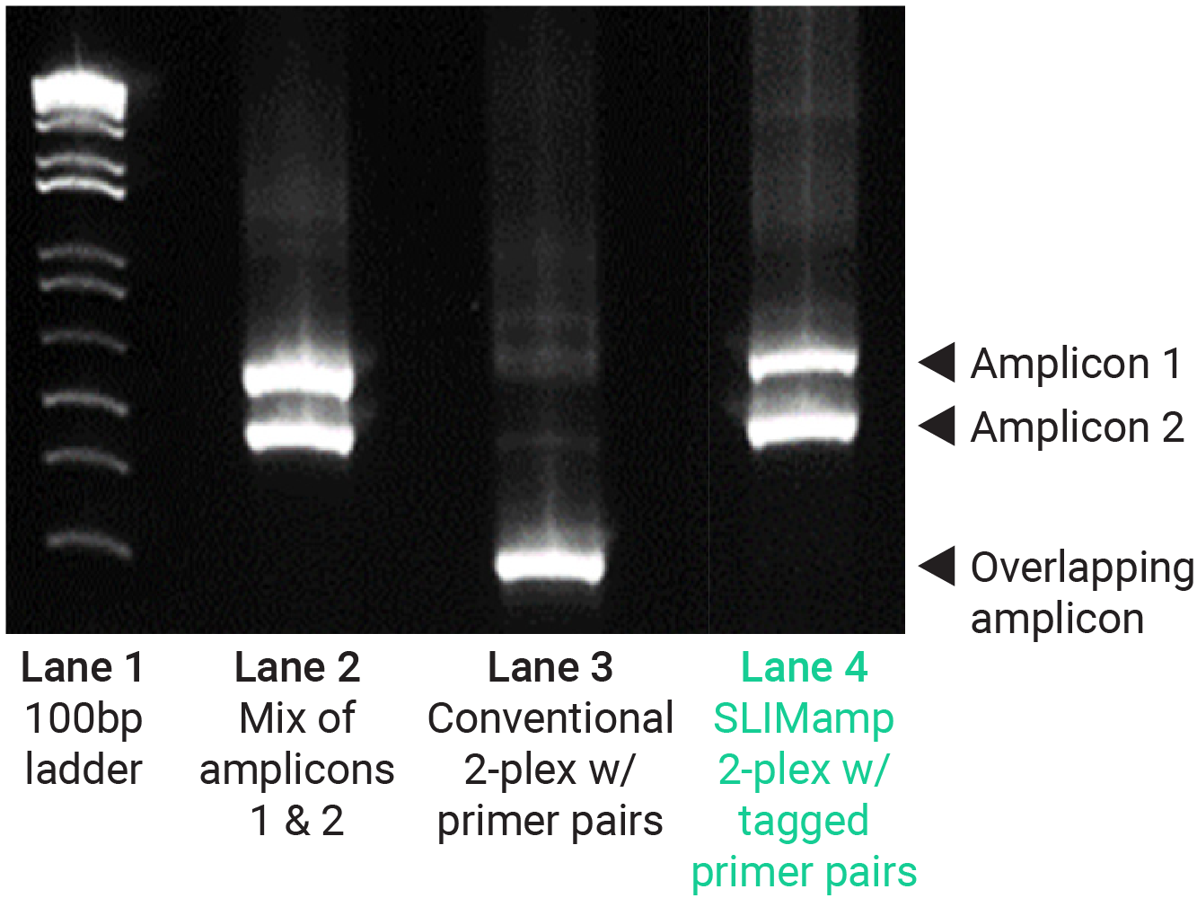 Slimamp target amplification by NGS